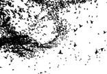 (eco) Sistemas Visuales en Processing